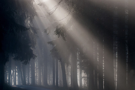 photography of trees during daytime