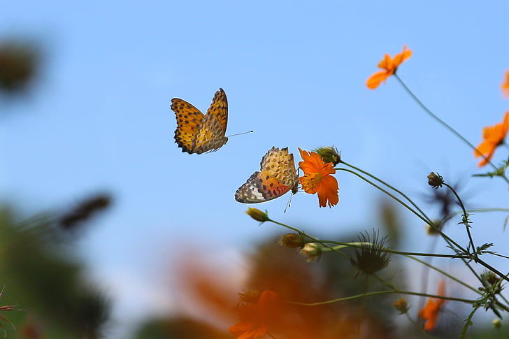 brown and black butterflies flying