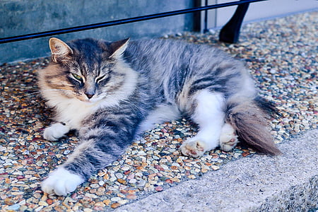 brown and white Maine coon cat laying on concrete surface