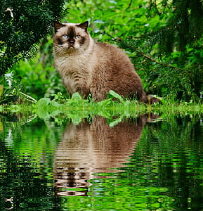shallow focus photography of brown cat on forest
