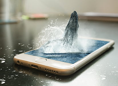 edited photo of whale jumping on iPhone's screen