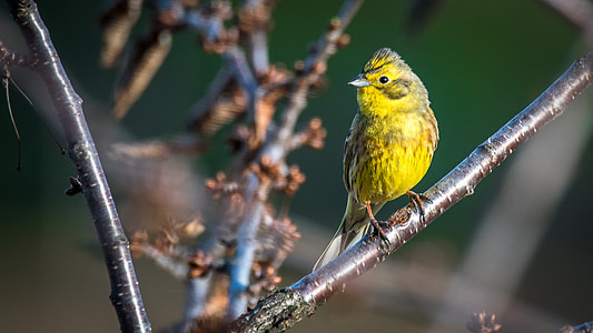 yellow bird perching on tree branch