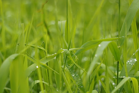 water dew on green grass
