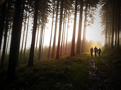 people walking near trees during sunset