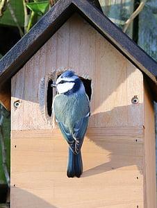 bird perched on birdhouse
