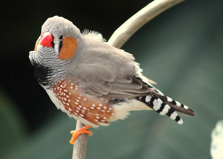 closeup photo of gray and brown short-beak bird