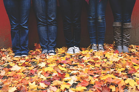 five person standing on maple leaves on ground