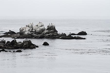 black rocks on shore during daytime