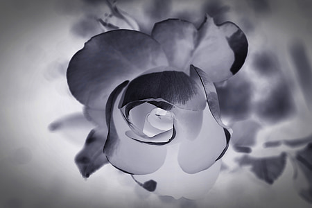 close up photography of flower with negative effects