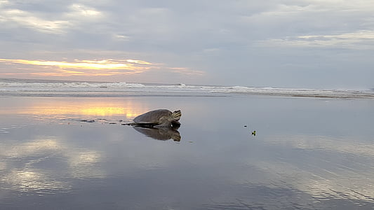 photo of turtle on shore
