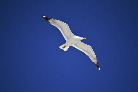 white and black seagull with blue background