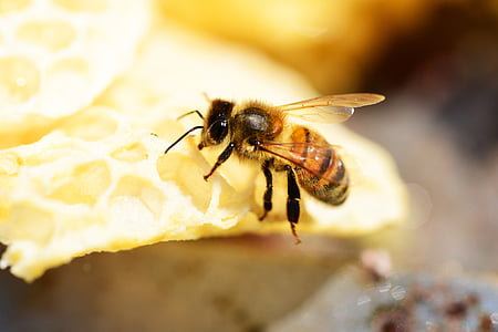 honey bee on hive