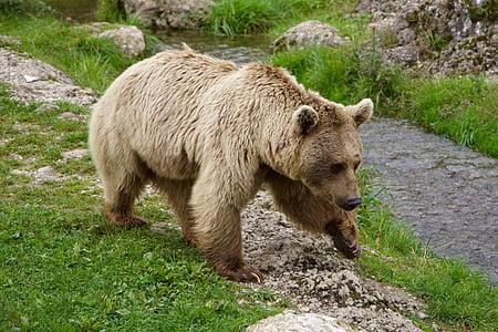 brown bear near river during daytime