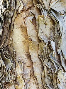 rough, bark, eucalyptus, tree, wood, nature