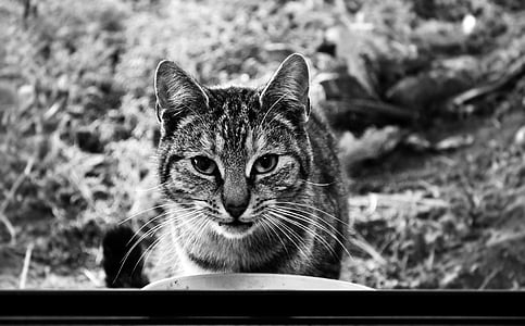 grayscale photography of a cat