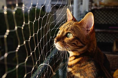 gray tabby cat sitting beside net
