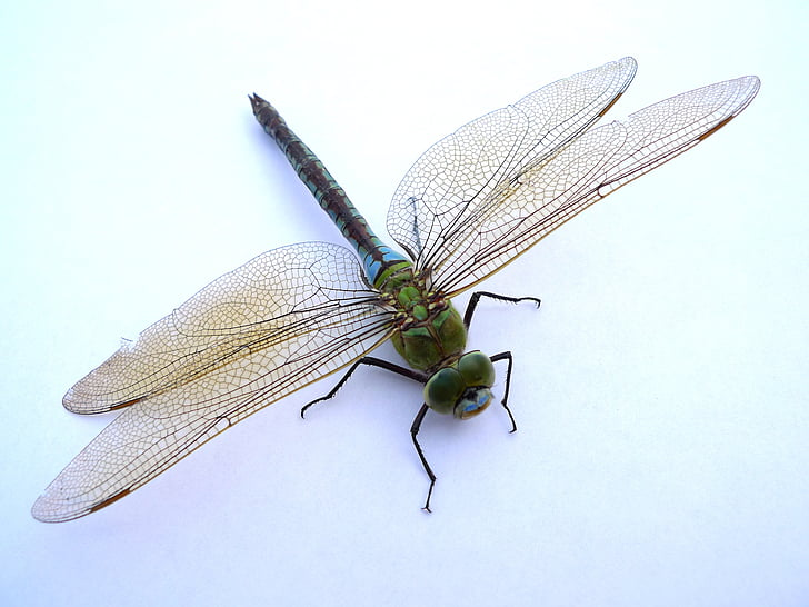 green dragonfly on white background