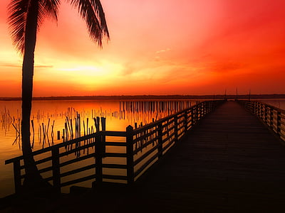 brown wooden jetty on water near coconut tree during golden hour