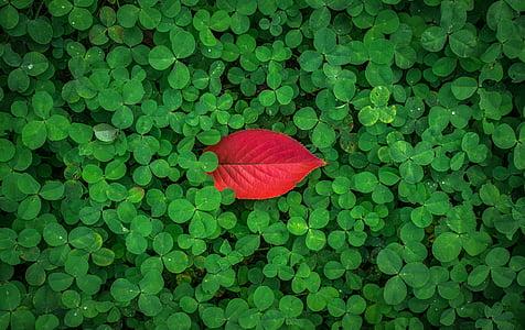red leaf atop green leaf plants