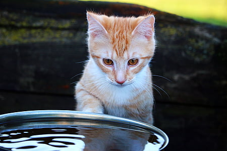 orange Tabby kitten in front of water