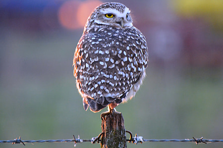 selective focus photography of owl perching on fence