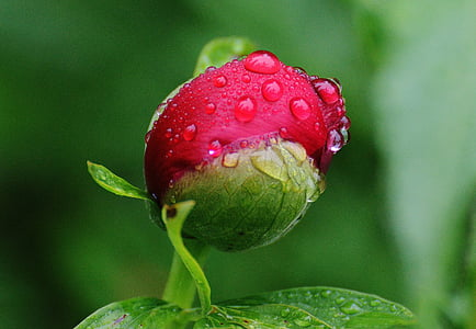 macro photography of red flower with water droplets