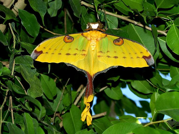 closeup photo of yellow moth