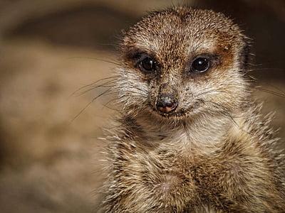 selective focus photography of lemur