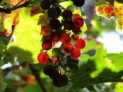 red and green grape fruit taken at daytime