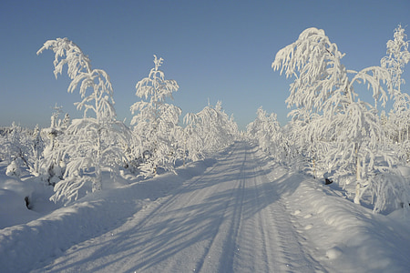 landscape photography of road between trees during winter