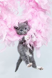 gray Tabby cat lying on pink feathers