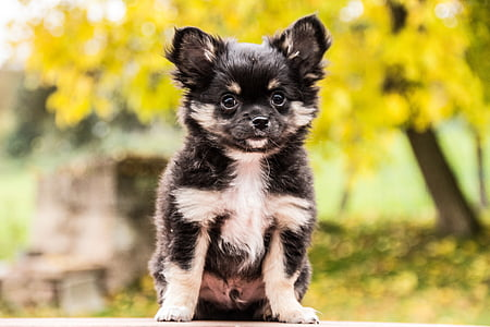 black and white puppy standing on ground