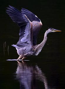 gray heron digital wallpaper