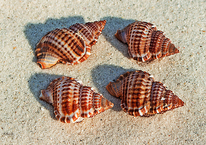 four brown shells