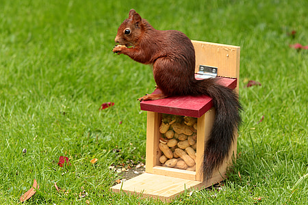 red squirrel on red and yellow box on focus photo