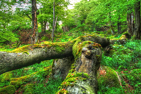 green mossy tree trunk