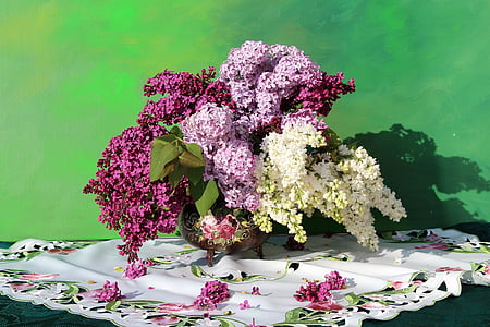 purple, pink, and white lilacs in bloom close up photo