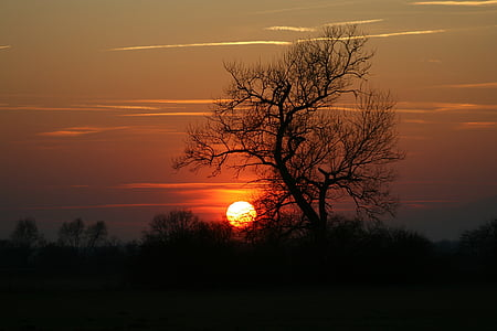 sunset and silhouette of trees