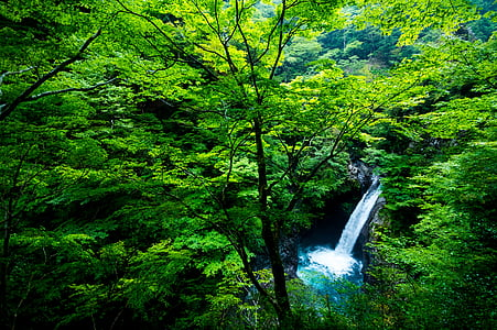 waterfalls inside forest near trees at daytime