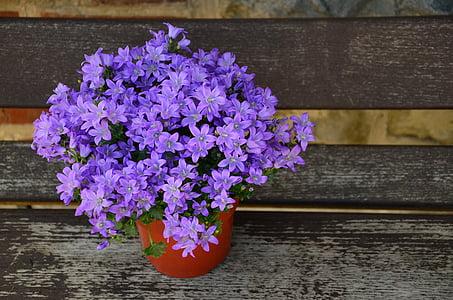 purple bellflowers centerpiece in closeup photo
