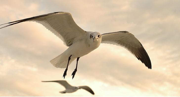 white and black flying bird