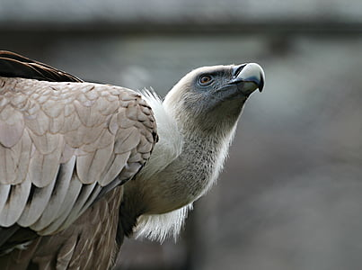 selective focus of brown and white eagle