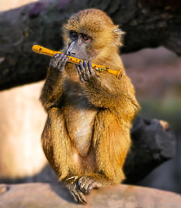 brown monkey holding flute