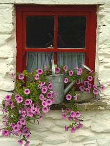pink petaled flower with gray metal watering can on window during daytime