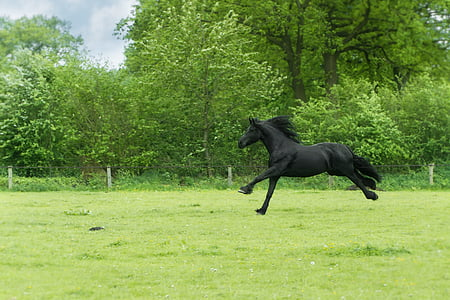 black horse on green grass