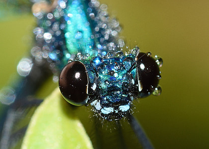 closeup photography of blue dragonfly