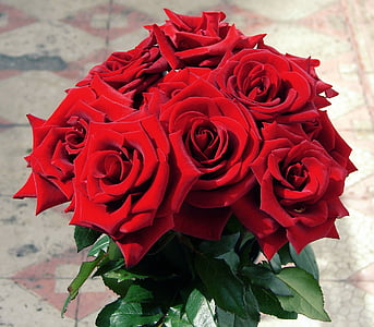 closeup of bouquet of red roses