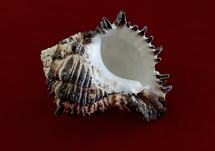 white and black seashell