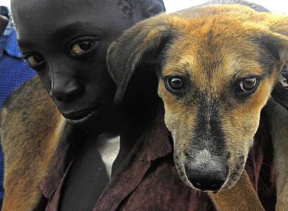 short-coated brown dog beside boy