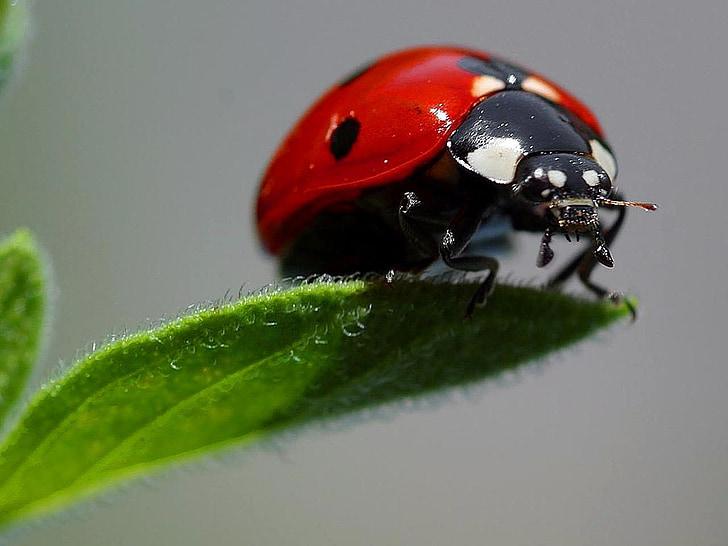 red ladybug on green leaf closeup photography